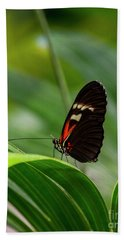 Butterfly #1946 Beach Sheet by Chuck Flewelling
