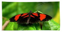 Butterfly #1955 Beach Sheet by Chuck Flewelling