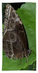 Butterfly 5 Beach Towel