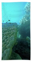 Butterfly Fish  Beach Towel