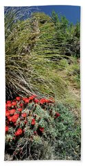 Crimson Barrel Cactus Beach Towel