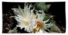 Cactus Flower 9 2 Beach Sheet