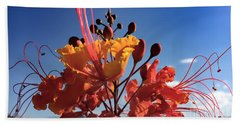 Beach Towel featuring the photograph Caesalpinia Bird Of Paradise by Chris Tarpening