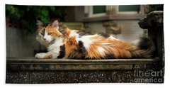 Calico Cat Beach Towel by Craig J Satterlee