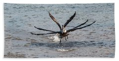 California Brown Pelicans Flying In Tandem Beach Towel