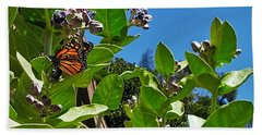 California Monarch Butterfly In San Diego  Beach Towel