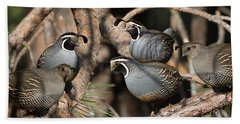 California Quail Covey  Beach Towel