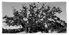 California Roadside Tree - Black And White Beach Sheet