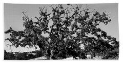 California Roadside Tree - Black And White Beach Sheet