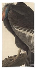 Californian Vulture Beach Towel by John James Audubon