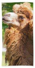 Camel Beach Sheet