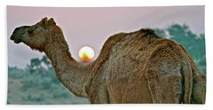 Camel Sunrise Beach Sheet by Michael Cinnamond