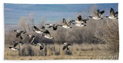 Canada  Geese Flock Beach Towel by Mike Dawson