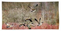 Canada Geese In Flight Beach Towel