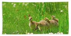 Beach Towel featuring the photograph Canada Goose Goslings In A Field Of Daisies by Sharon Talson