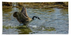 Canada Goose Takes Flight, Frank Lake, Alberta, Canada Beach Sheet
