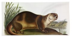 Northern River Otter Beach Towels