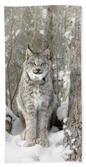 Canadian Wilderness Lynx Beach Sheet by Wes and Dotty Weber