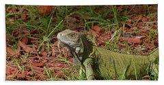 Candid Creeping Common Iguana  Beach Towel by DejaVu Designs