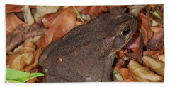 Cane Toad Beach Sheet