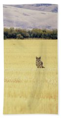Canidae Beach Towel
