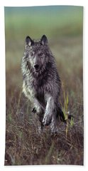 Canis Lupus Beach Towel by Tim Fitzharris