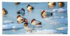 Canvasback Duck Standing On Ice In The Chesapeake Bay Beach Sheet