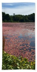 Cape Cod Cranberry Bog Beach Towel