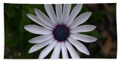 Cape Daisy Beach Sheet