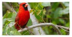 Cardinal 147 Beach Sheet by Michael Fryd