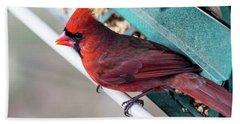 Cardinal Close Up Beach Towel
