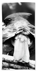 Cardinal In Black And White Beach Towel