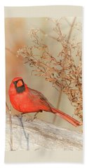Cardinal In Fall  Beach Towel
