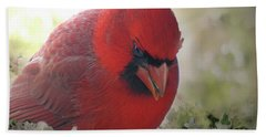 Beach Towel featuring the photograph Cardinal In Flowers by Debbie Portwood