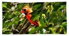 Cardinal In Tree Beach Towel