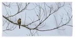 Cardinal In Tree Beach Sheet by Richard Rizzo