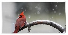 Cardinal Snowfall Beach Towel