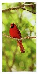 Cardinal Stare Beach Towel
