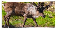 Caribou Antlers In Velvet Beach Towel by Allan Levin
