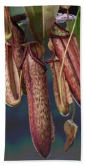 Carnivorous Pitcher Plant Beach Towel