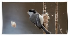 Carolina Chickadee Feeding On Cattail Beach Sheet