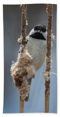 Carolina Chickadee On Cattails Beach Sheet
