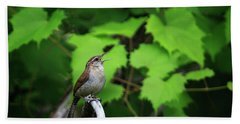 Carolina Wren Beach Towel by Gary Hall