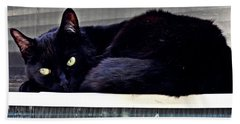 Cat Conditioner Beach Sheet