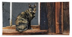 Cat In A Window Beach Sheet by Scott Warner
