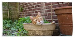 Beach Towel featuring the photograph Cat In Empty Pot by Patricia Hofmeester