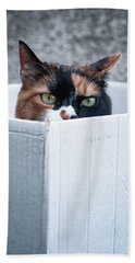 Beach Towel featuring the photograph Cat In The Box by Laura Melis