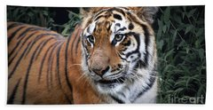 Beach Towel featuring the photograph Cat In The Jungle by Charuhas Images