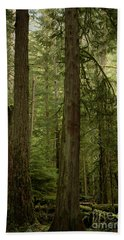Cathedral Grove Beach Towel