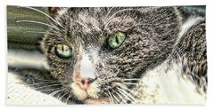 Cats Eyes Beach Towel by Dennis Baswell